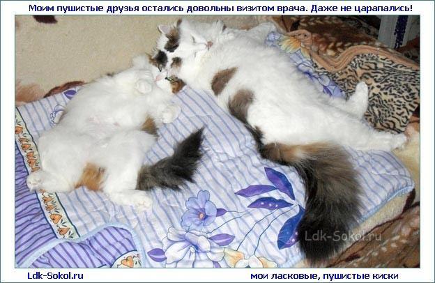Забота о кошке - это также и забота о её здоровье