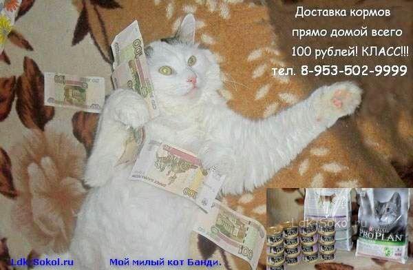 Зоовологда - интернет-магазин для ваших питомцев!