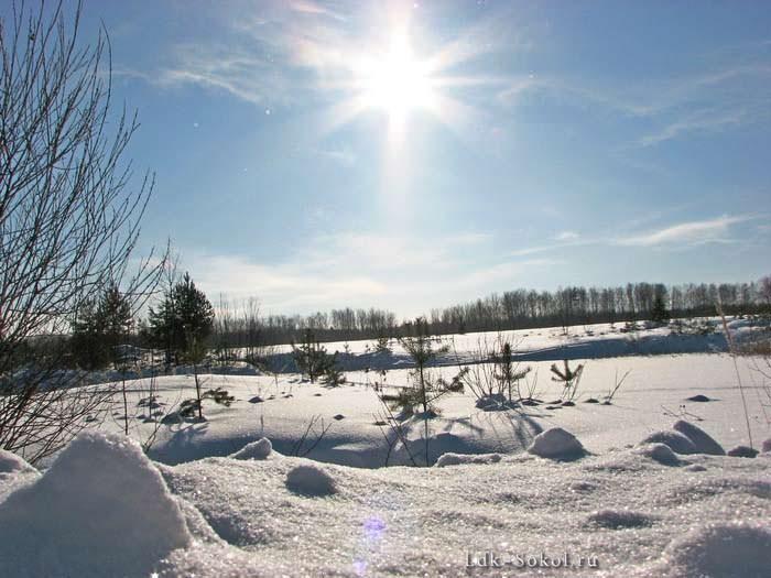 Путешествие в зимний лес — шера
