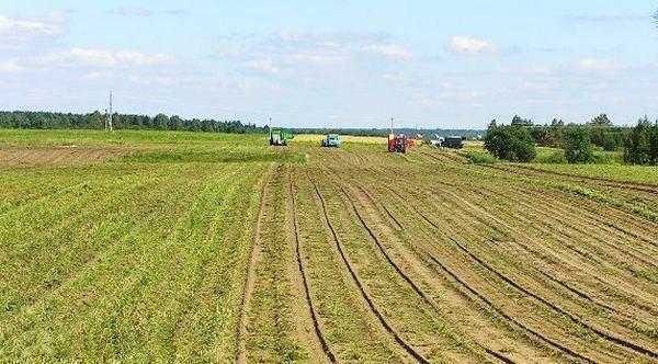 Боровецкое поселение: картофельные поля