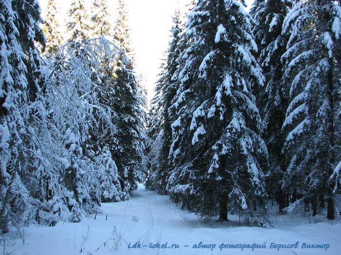 Холодная красота зимних пейзажей