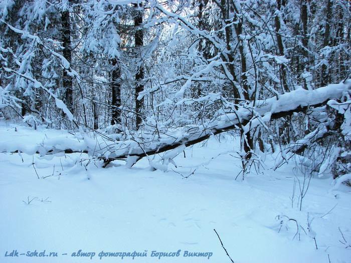 Зимние пейзажи где то в сокольских