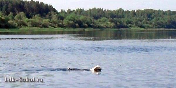 Река Кубена и Тошка
