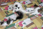 мои кошки: Кузина и Банди