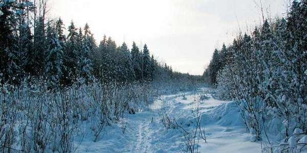 Зимние пейзажи: где-то в Сокольских лесах