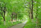 Городской парк: зеленый островок