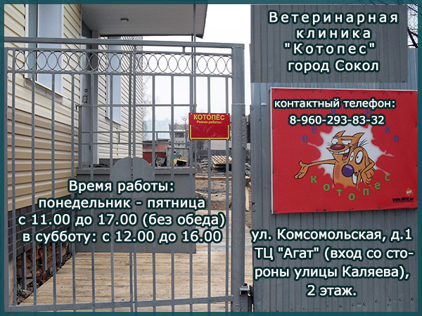 """Ветеринарная клиника """"Котопес"""" в городе Сокол"""