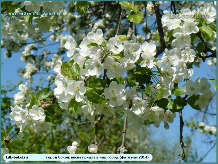 Весна пришла в Сокол