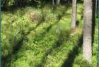 в сокольском лесу