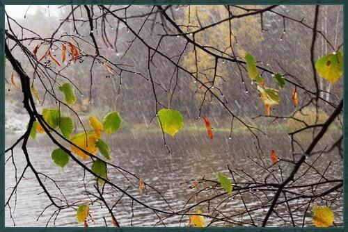 Играет дождь с листвой в лапту