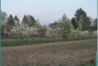 деревня Замошье
