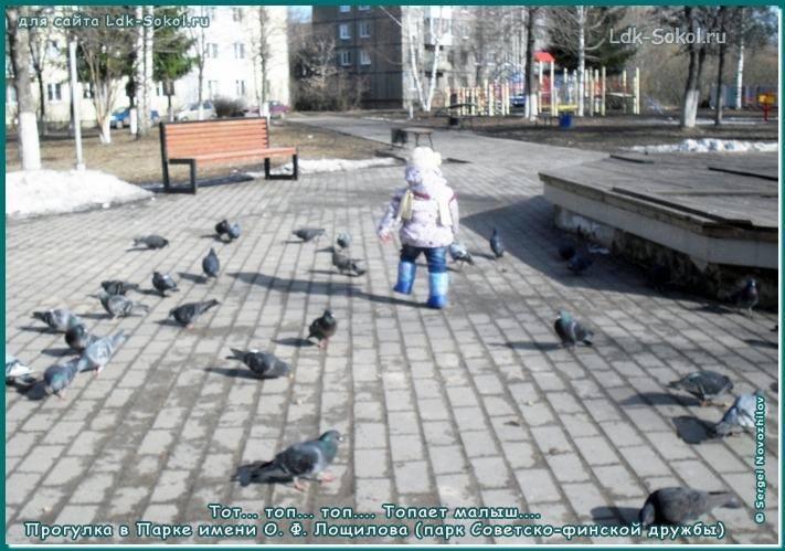 Город юности Сокол