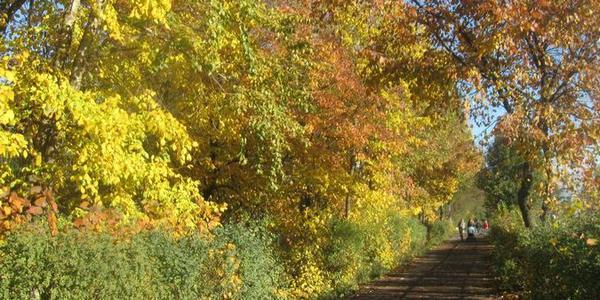 Осень в моём городе - фотовзгляд