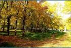 Осень в моём городе