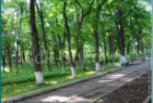 парки и скверы города Сокола