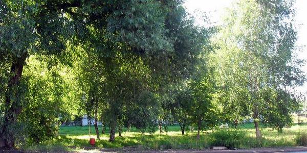 Сквер ветеранов 21-ДОЗ в микрорайоне ЛДК