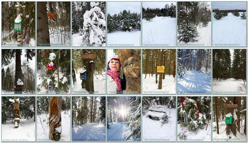 Лыжня Здоровья - Сокольский район