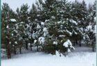 Лыжня здоровья, Сокольский район