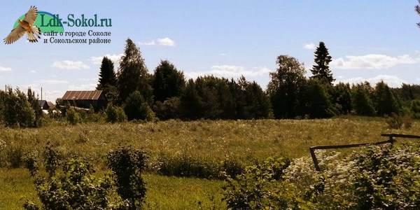 Деревня Курилово в Сокольском районе