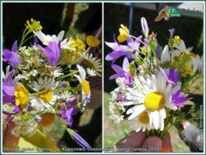 Летний вальс цветов, Сокольский район