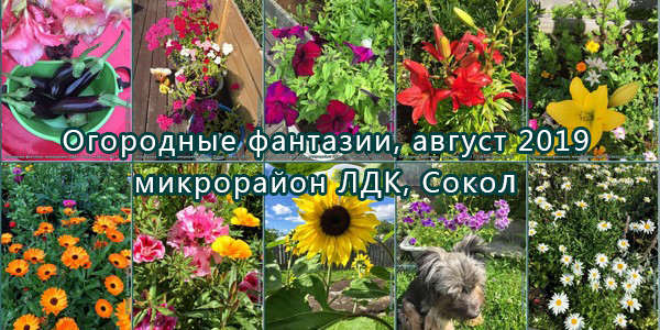 Огородные фантазии в объективе Ирины Дубовиковой