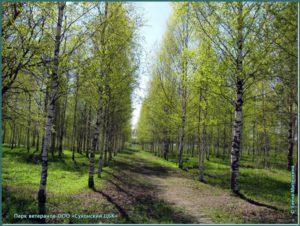 Парк Ветеранов город Сокол