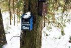 Лыжня здоровья (Сокол, январь 2020)