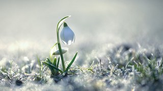 Люблю тебя, весна моя