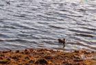 Набережная реки Сухоны, город Сокол (апрель 2020)