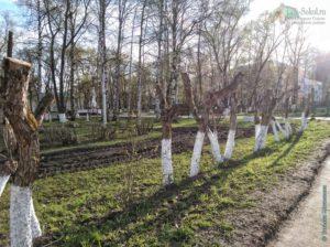 """""""Обкарнали"""" деревья в Пионерском сквере г. Сокол"""