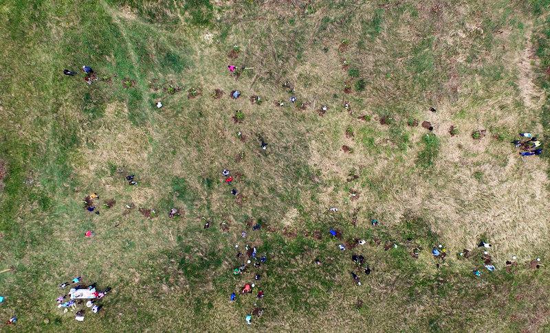 Сосновая аллея в виде хэштега(#) в мкр Шатенево, г. Сокол (фото 2016 года)