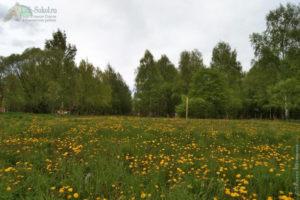 Территория за Детской поликлиникой, ул. Суворова г. Сокол