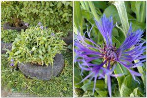 цветы на ул. Первомайская, 5 город Сокол