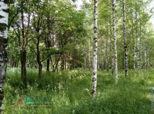 Парк Ветеранов в Печаткино