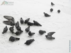Зимний город и голуби (Сокол, 2021)